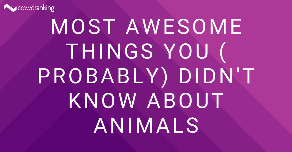 Things I Know About You: Most Awesome Things You (Probably) Didn't Know About